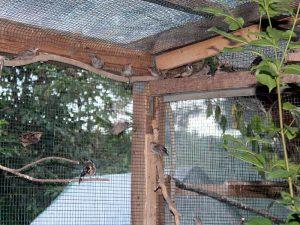 In einer sonnigen Freivoliere können defekte Federn am besten regeneriert werden, © Anke Dornbach