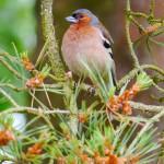 Gesetze zum Thema Wildvögel