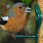 Erfahrungsberichte zur Vogelfütterung