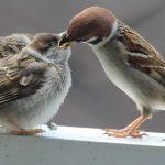 Geprägt auf Vögel